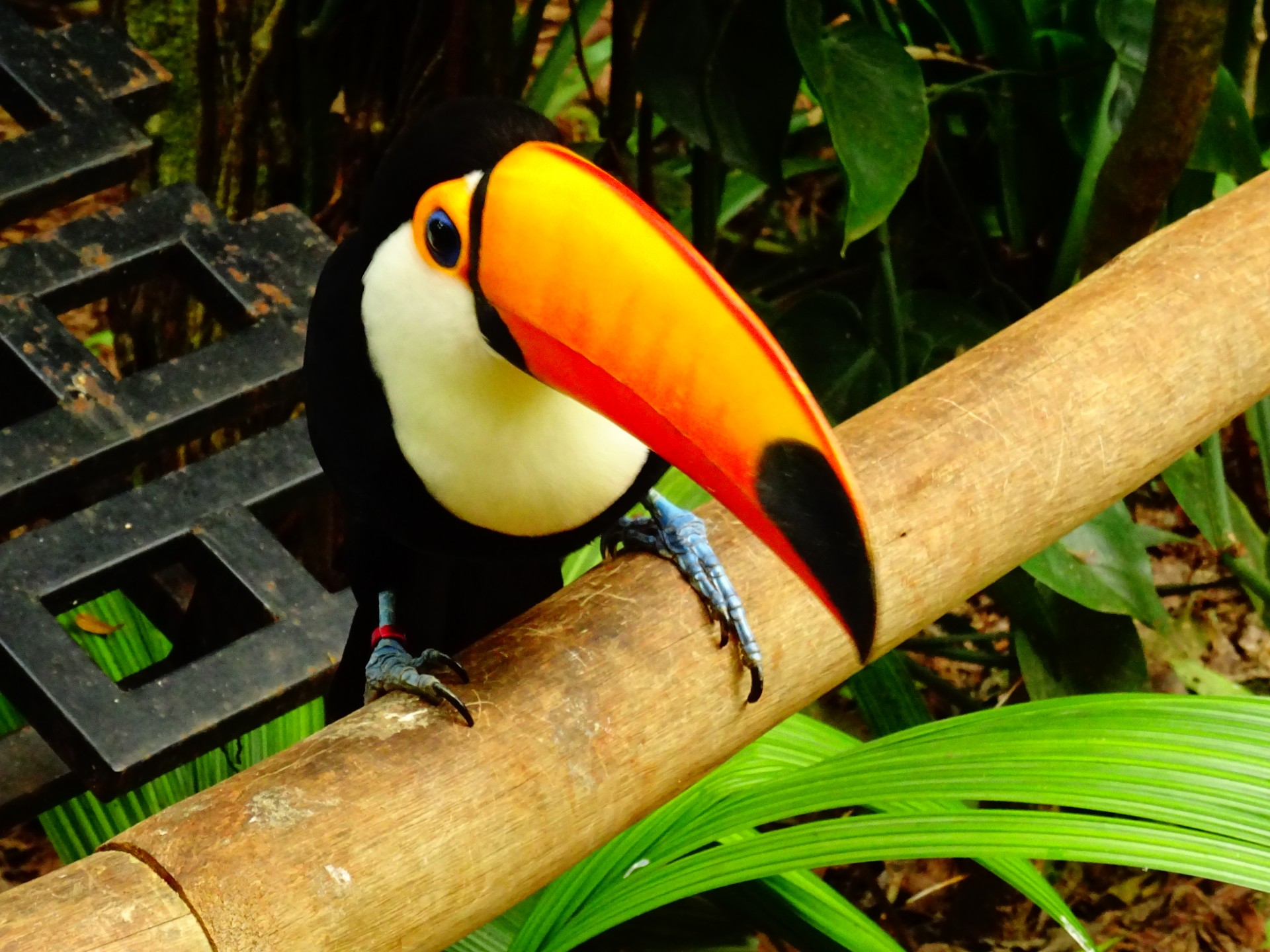 This toucan was particularly friendly.