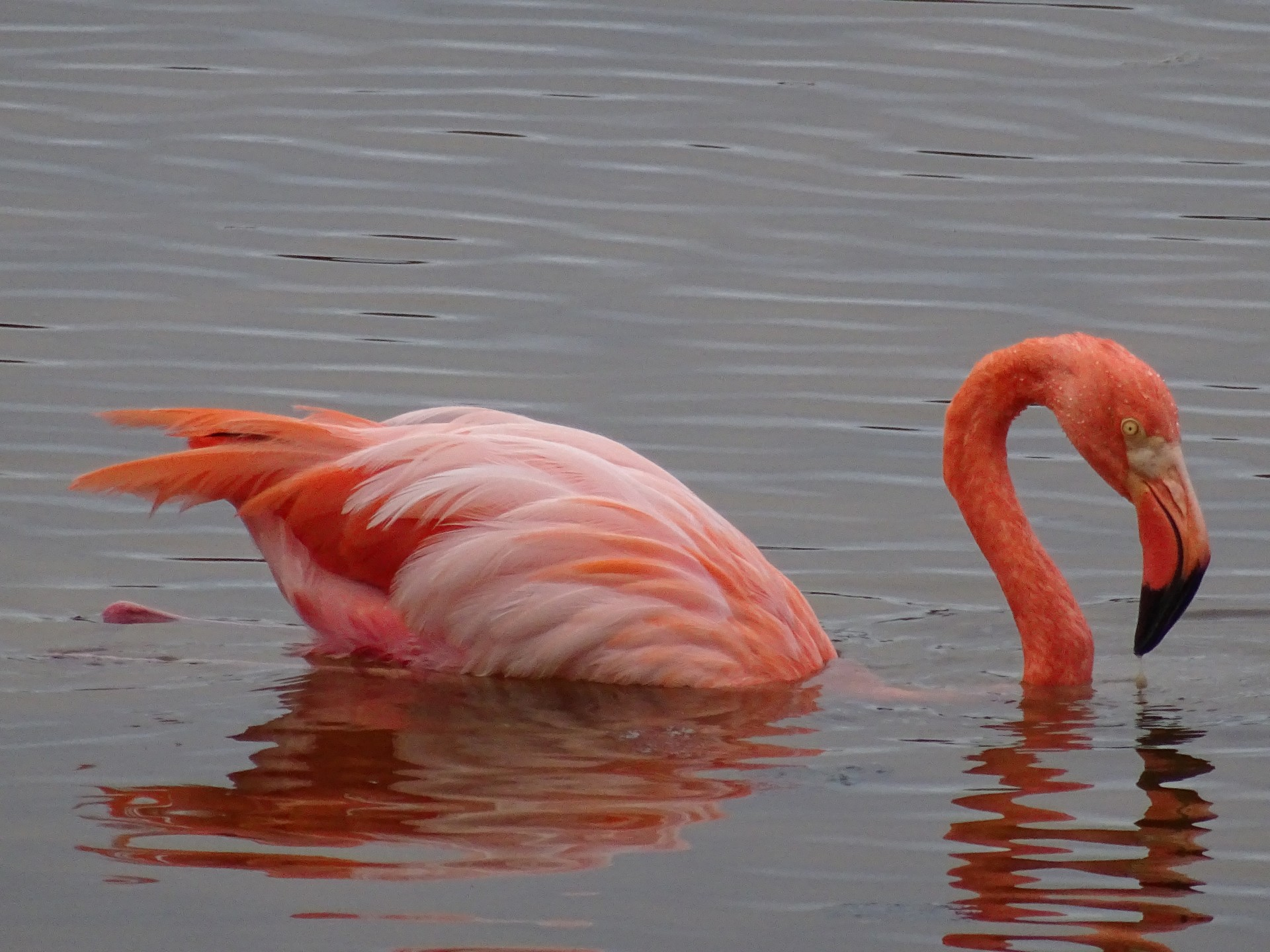 Flamingos never get old.